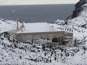 Shackleton's hut at Cape Royds surrounded by Adelie penguins